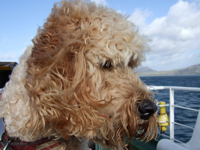 Ardnamurchan 2010 - day trip to Tobermory