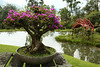Recinto del Pensamiento is a park near Manizales which can be visited only guided.<br /> <br /> One of the best things is the bonsai collection.
