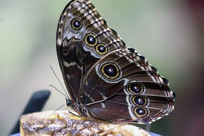 La Paz Gardens - Butterflies 045