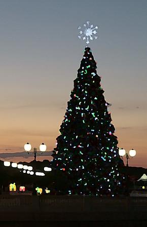 CHRISTMAS TREE - CRANES ROOST-ALTAMONTE SPRINGS FLORIDA