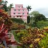 Orchid Farm 17