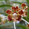 Orchid Farm 03