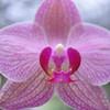 Orchid Farm 04