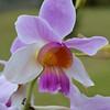 Orchid Farm 12