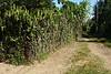 Cactus wall :)