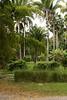 Unlike the areas around it has plenty of vegetation.