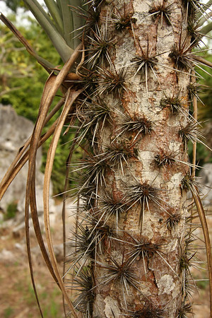 And plants with protective spikes.
