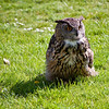 19 An owl in the grass.  It is what it seems.