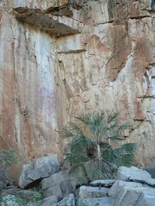 Aboriginal rock paintingsat Katherine Gorge. The paintings are well above ground level, so perhaps the Mimi (spirits) drew them!