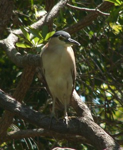 Bird at Yellow Water Billabong.