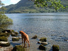 Our dog, Ben having a paddle in Ullswater Lake.