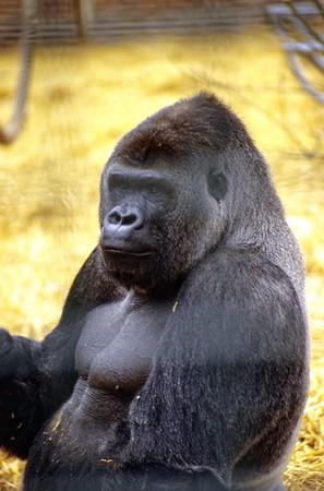 1992 Howlett's Zoo