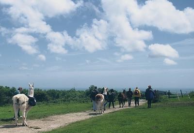 1999 Walking with Lamas