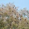 Bat tree!