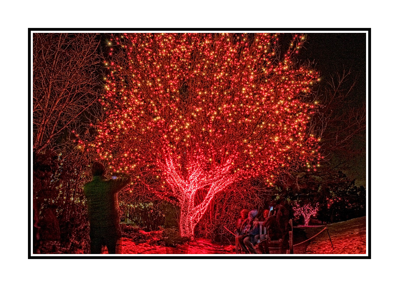 At the Denver Botanic Garden light display