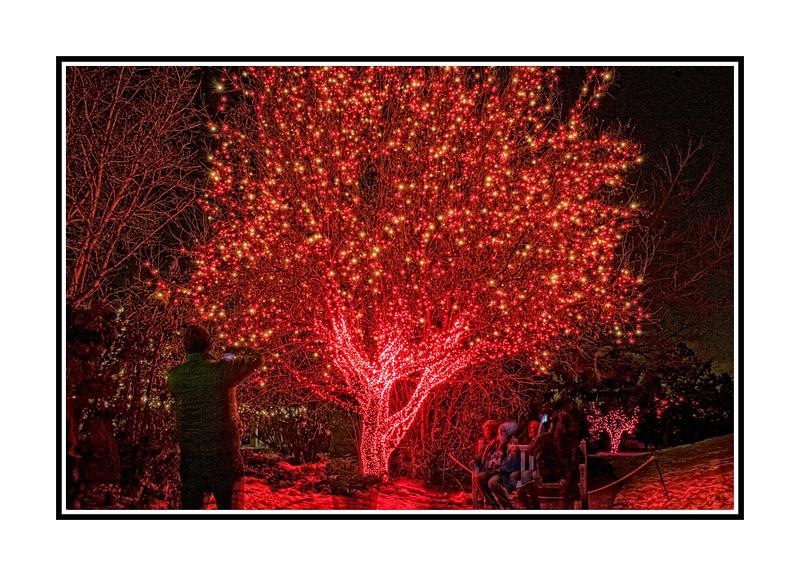 At the Denver Botanic Garden light display