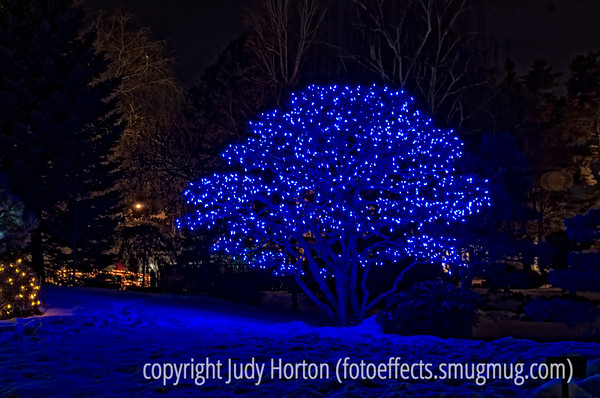 Denver Botanic Garden Holiday LIghting Display