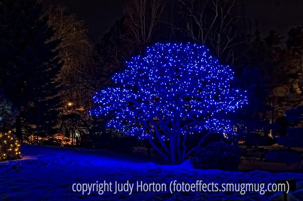 Denver Botanic Garden Holiday LIghting Display