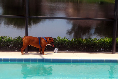 001 Maxwell chasing ball