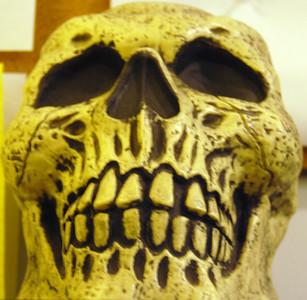 02 Skeleton Head