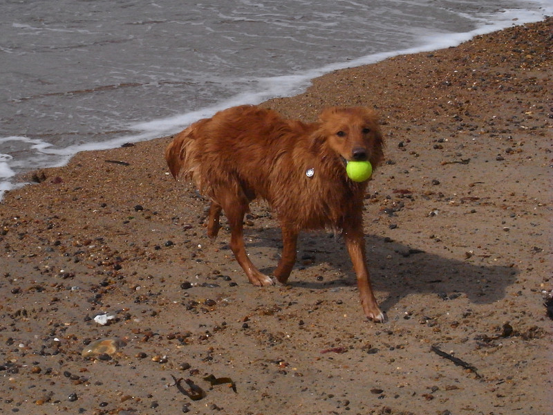 Wet dog with ball