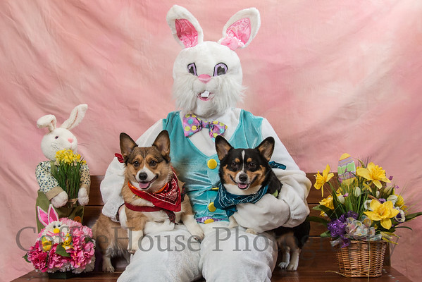 Easter Bunny / Pets 2015