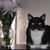 Their cat named George Clooney loved the flowers