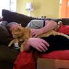 Cat, Dog, Human sandwich.