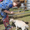 Crossroads Community Church in Fitchburg had an interactive easter experience for the children featuring a live camel and donkey. Rheannon LeBlanc, 11, of Fitchburg and a member of the church pets one of the baby goats at the event. SENTINEL & ENTERPRISE/JOHN LOVE