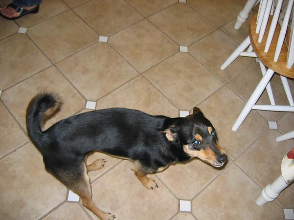 Nena's dog Milo