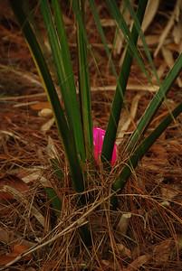 2009 04 12 - Easter Picnic 032