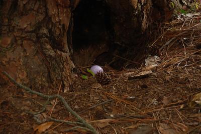 2009 04 12 - Easter Picnic 038