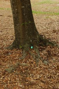 2009 04 12 - Easter Picnic 027