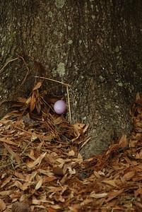 2009 04 12 - Easter Picnic 030