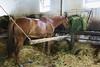 Hungary - Kalocsa - Horse Ranch and Show 390