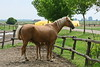 Hungary - Kalocsa - Horse Ranch and Show 017