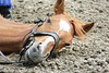 Hungary - Kalocsa - Horse Ranch and Show 056