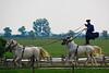 Hungary - Kalocsa - Horse Ranch and Show 184