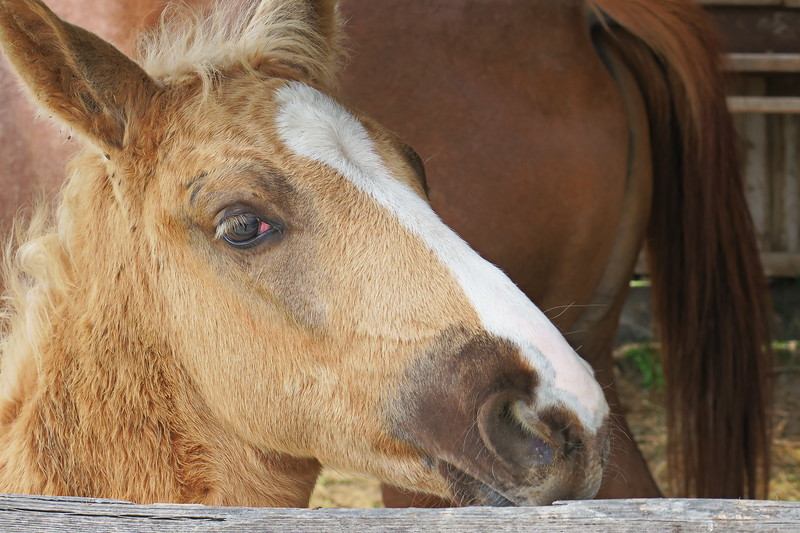 Hungary - Kalocsa - Horse Ranch and Show 322