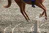 Hungary - Kalocsa - Horse Ranch and Show 085