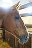 Hungary - Kalocsa - Horse Ranch and Show 336