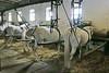 Hungary - Kalocsa - Horse Ranch and Show 317