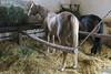 Hungary - Kalocsa - Horse Ranch and Show 314