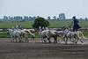 Hungary - Kalocsa - Horse Ranch and Show 209