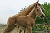 Hungary - Kalocsa - Horse Ranch and Show 342