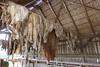 Hungary - Kalocsa - Horse Ranch and Show 325