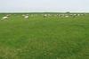 Hungary - Kalocsa - Horse Ranch and Show 297