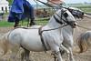 Hungary - Kalocsa - Horse Ranch and Show 231