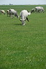 Hungary - Kalocsa - Horse Ranch and Show 302