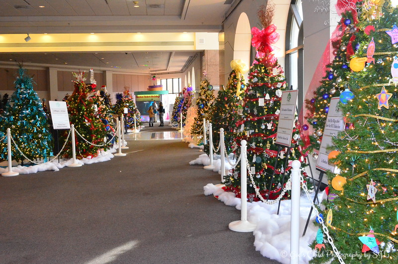 CHRISTMAS TREES ON DISPLAY